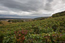 Burgundy - Gevrey Chambertin