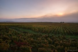 Gevrey Chambertin - early morning