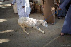 Goat Market Bahla